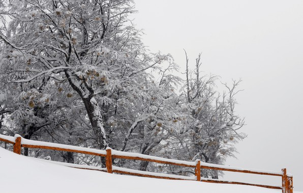 Picture snow, nature, tree, the fence