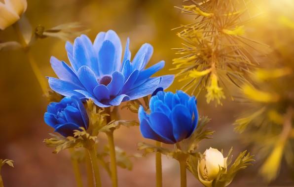 Picture nature, paint, petals