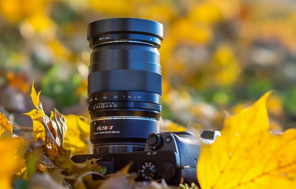Picture leaves, camera, bokeh, SONY, SONY alpha 6000