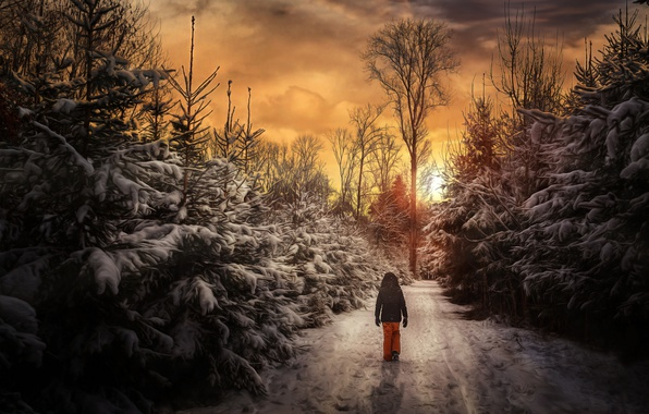 Picture winter, forest, sunset, people, walk
