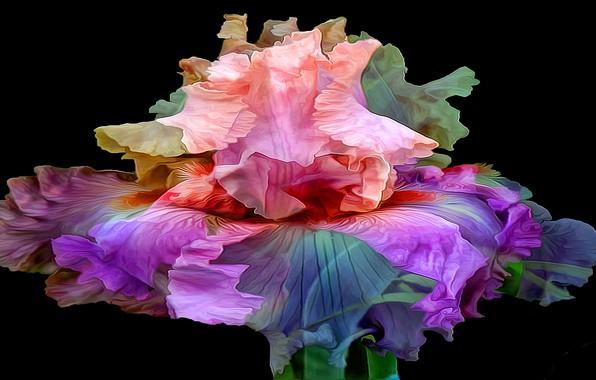 Picture flower, line, background, paint, petals, iris