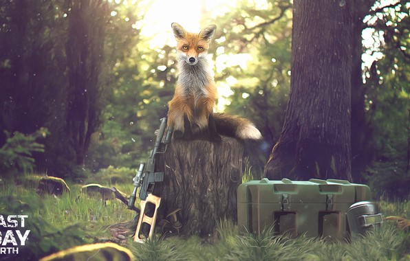 Picture Forest, Weapons, Fox, Mask, Gun, Zombies, Forest, Apocalypse, Fox, Survival, Survival, Box, Last Day on …