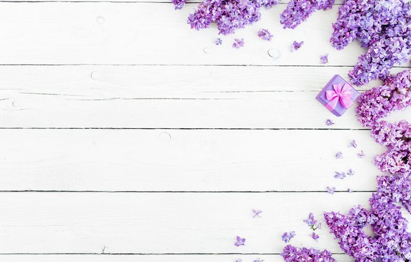 Picture flowers, background, spring, flowers, lilac, lilac
