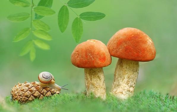 Picture mushrooms, snail, leaves, bump, aspen