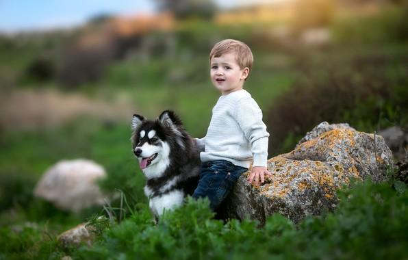 Picture grass, nature, animal, stone, dog, boy, baby, child, husky, dog
