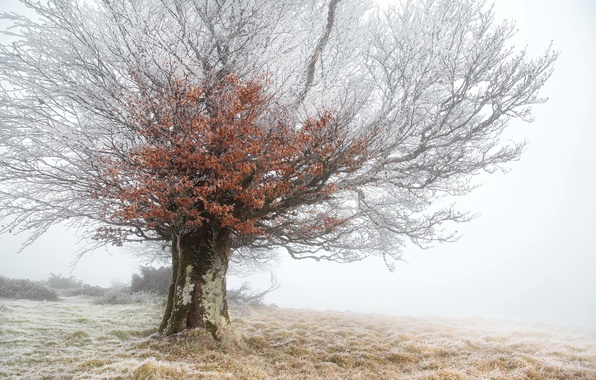 Picture frost, fog, tree