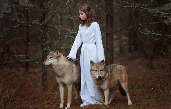 Picture forest, girl, wolves, Svetlana Nicotine