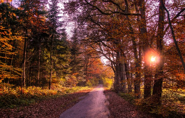 Picture road, autumn, forest, leaves, the sun, trees