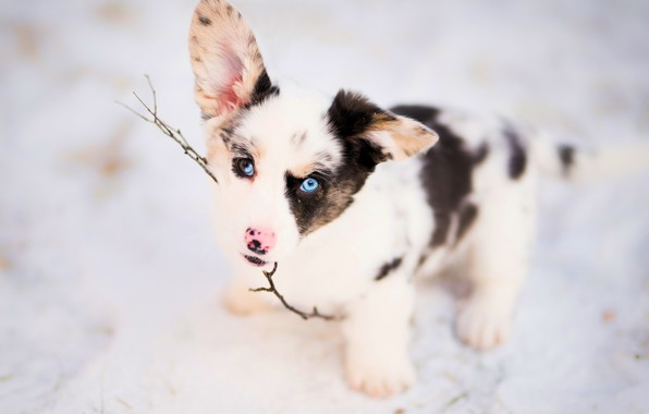 Picture look, branch, puppy, ears, face, doggie