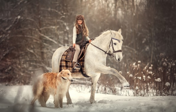 Picture winter, snow, horse, dog, girl, rider