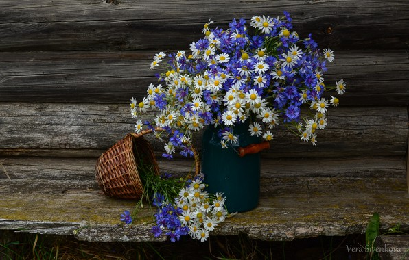 Picture summer, flowers, chamomile, still life, cornflowers