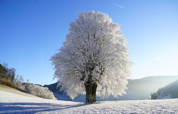 Picture winter, frost, the sky, the sun, snow, tree, glade