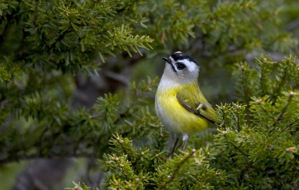 Picture tree, bird, bright