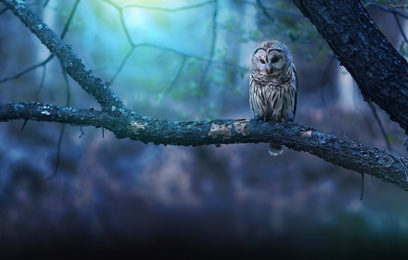 Picture background, tree, owl, branch
