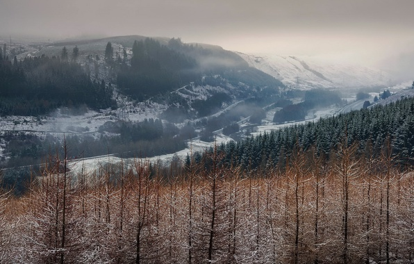 Picture forest, nature, fog, dal