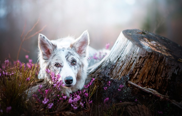 Picture flowers, stump, dog