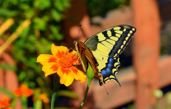Picture Macro, Butterfly, Flower, Flower, Bokeh, Macro, Butterfly