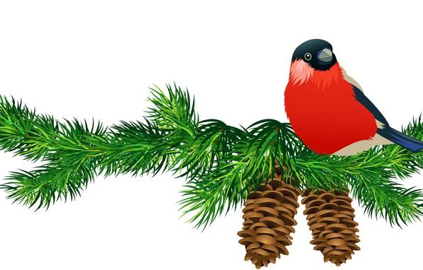 Picture spruce, bird, bullfinch, bumps