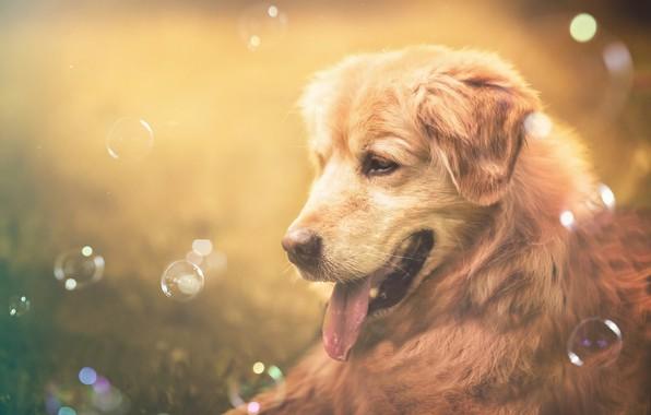 Picture language, face, mood, dog, bubbles, dog, bokeh