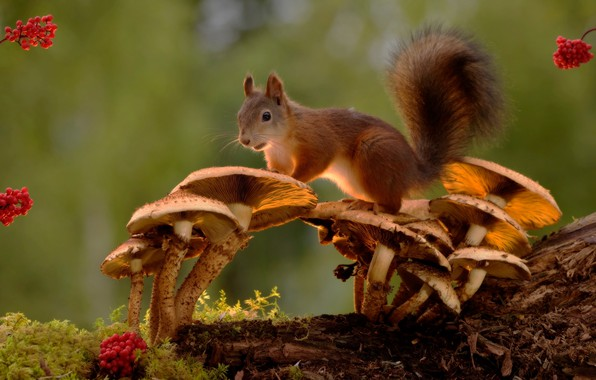 Picture berries, tree, animal, mushrooms, moss, protein, rodent