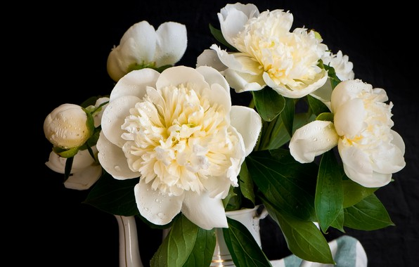 Picture drops, white, peonies