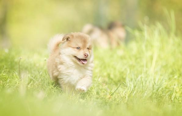 Picture grass, baby, puppy, walk, bokeh, doggie