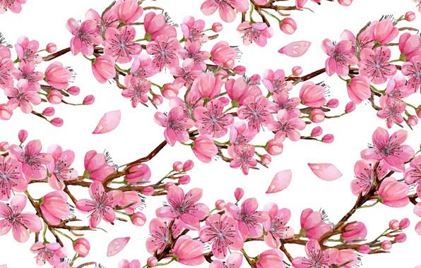 Picture flowers, branches, tree, texture, white background, wood, texture, flowers, white background, twigs