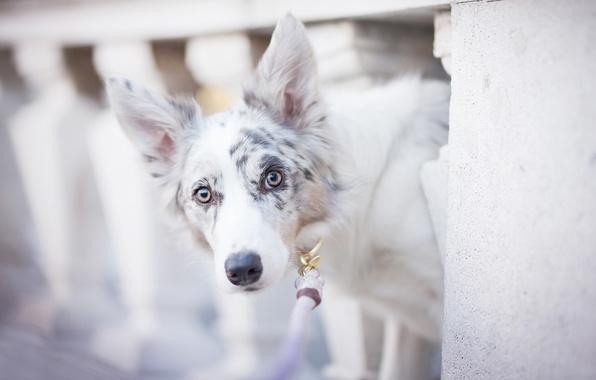 Picture dog, spot, bokeh