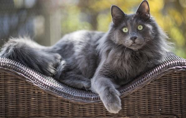 Picture eyes, cat, look, wool