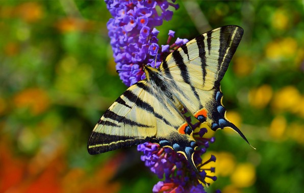 Picture Macro, Spring, Butterfly, Flowers, Spring, Macro, Butterfly