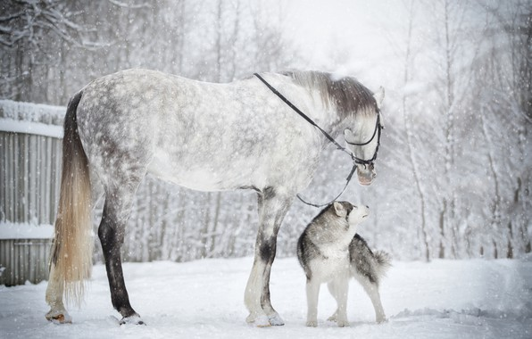 Picture winter, snow, horse, horse, dog, friends, husky
