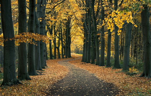 """Picture road, autumn, forest, leaves, trees, foliage, Netherlands, Netherlands, Estate """"De Horsten"""", Voorschoten, Voorschoten"""