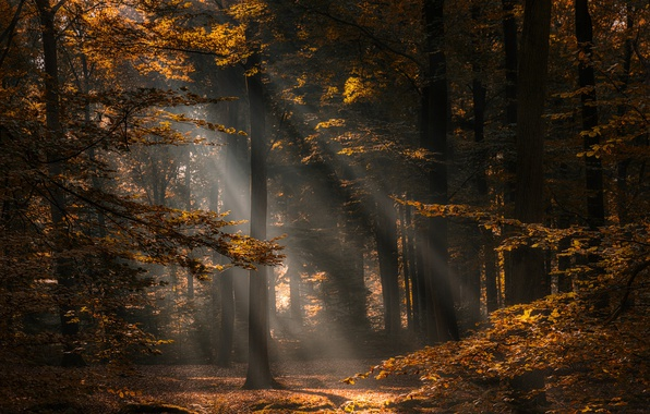 Picture autumn, forest, trees, Netherlands, Netherlands, North Brabant, North Brabant