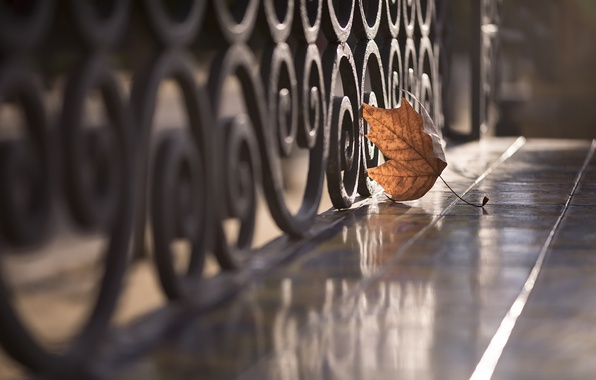 Picture sheet, street, the fence