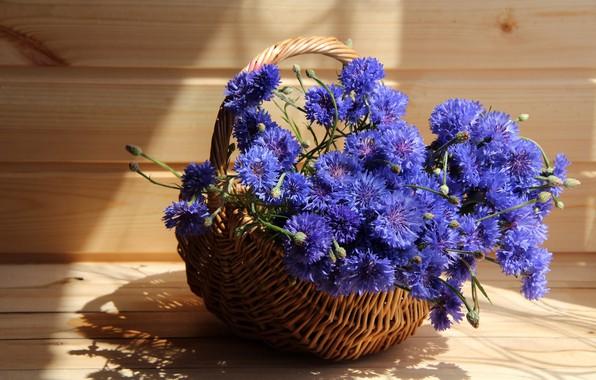 Picture summer, flowers, cornflowers, cottage, composition