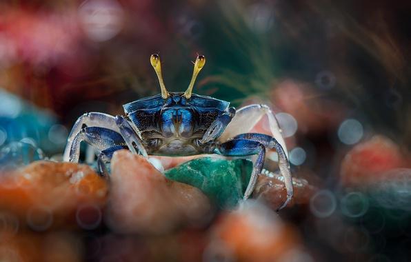 Picture macro, stones, crab, bokeh