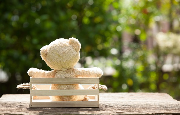 Picture toy, garden, bear, bear, garden, teddy, lonely, cute, lonely