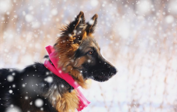 Picture look, snow, each, puppy, German shepherd