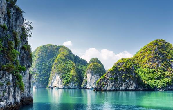 Picture Nature, Sea, Rock, Rock, Vietnam, Bay, Halong Bay