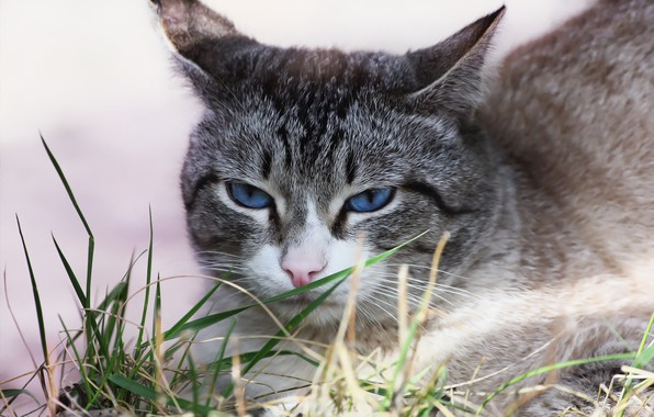 Picture cat, face, weed