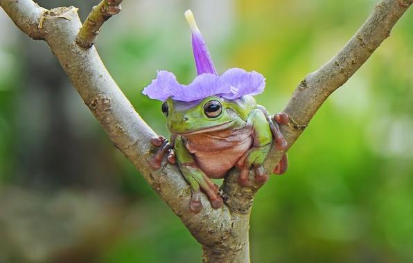 Picture flower, animal, frog, branch, amphibian, cap