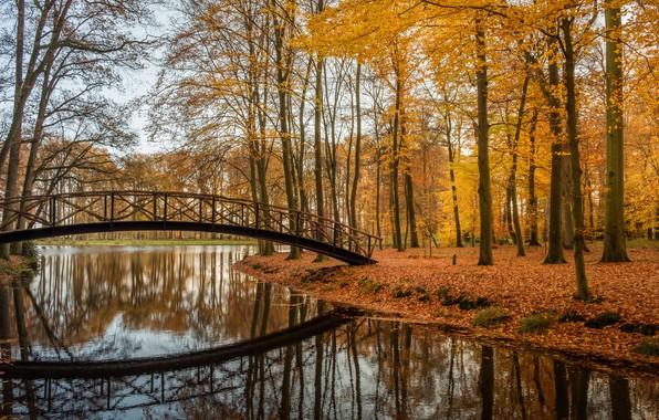 Picture autumn, trees, bridge, lake, Park, reflection, Netherlands, Netherlands, Brummen, Lifestyle, Brummen, Verstonden
