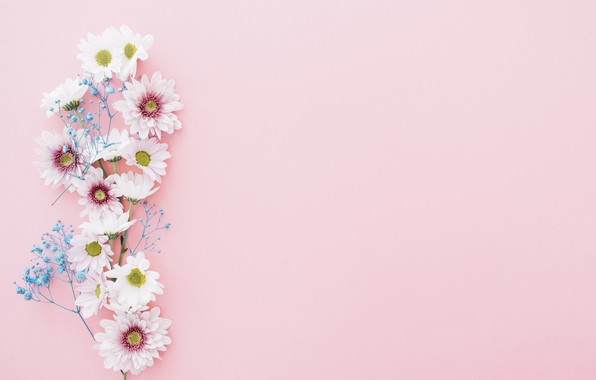 Picture flowers, chrysanthemum, pink, flowers, composition, composition, floral