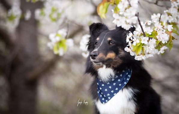 Photo wallpaper each, dog, spring