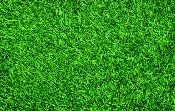 Picture grass, background, lawn, green, summer, grass, green