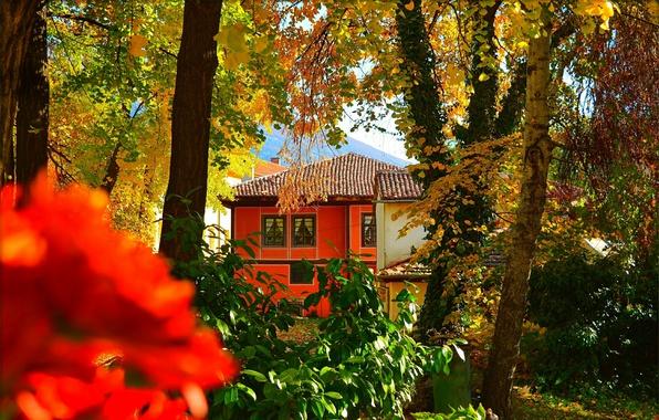 Picture Autumn, House, House, Fall, Autumn
