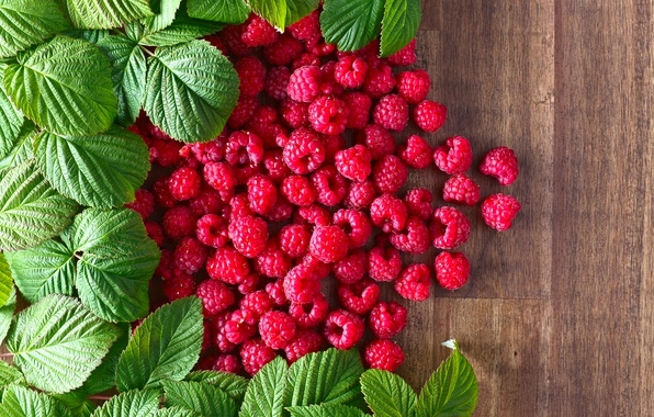 Picture Leaves, Berries, Food, Raspberry