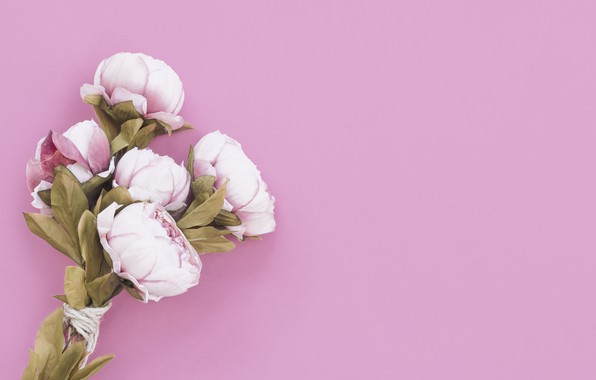 Picture flowers, background, bouquet, Peonies