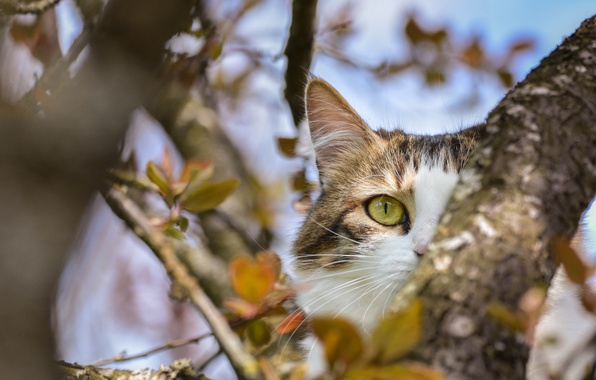 Picture eyes, cat, tree
