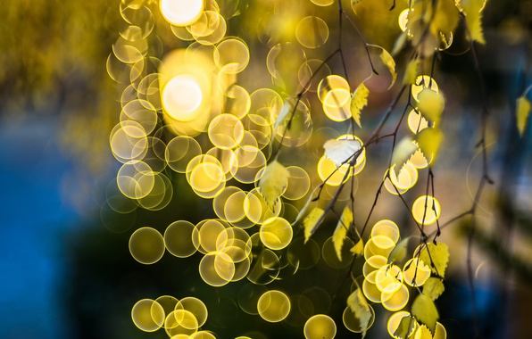 Picture leaves, light, branch